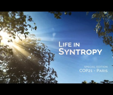 life in syntropy