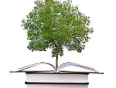 Escolas sustentáveis